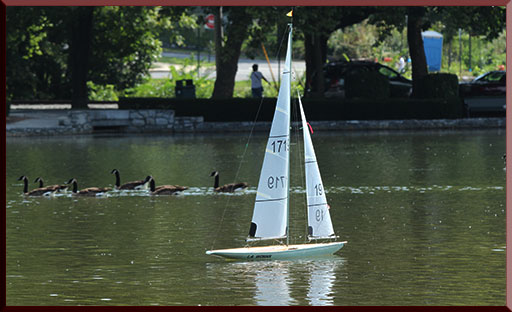 Geese and a model yacht
